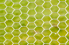 Frozen Chicken Wire. Chicken wire, poultry netting in the winter royalty free stock photography