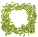 Frozen chopped French beans stock photography