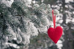 Frozen christmas tree and blurred snow with red heart. Love and royalty free stock photography