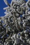 Frozen christmas tree Royalty Free Stock Photo