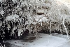 Frozen clay roots of a tree. Over a snow on cold winter day Stock Image