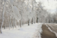 Frozen Royalty Free Stock Images