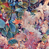 Frozen colorful leaves background Stock Images