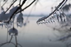 Frozen conformations Stock Images