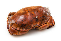 Frozen cooked edible brown crab Stock Images