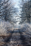 Frozen country road. Royalty Free Stock Photo
