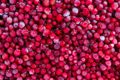 Frozen cowberries. Close up background Stock Photo