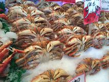 Frozen Crabs on Ice Royalty Free Stock Photo