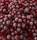 Frozen cranberries. Royalty Free Stock Images