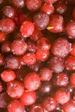 Frozen cranberries Royalty Free Stock Image
