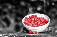 Frozen Cranberries on Black and White Background Stock Images