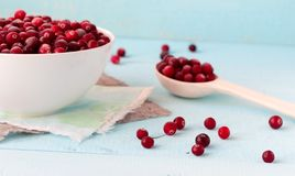 Frozen Cranberries in Bowl on blue desk. Frozen Cranberries in white porcelain bowl on blue wooden desk with spoon full of berries Royalty Free Stock Images