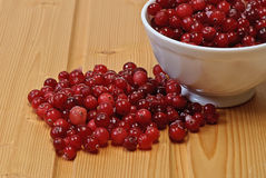 Frozen cranberries, cranberry Royalty Free Stock Photo