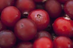 Frozen cranberries Stock Photo