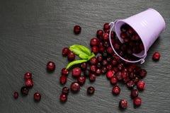 Frozen cranberries on slate board Royalty Free Stock Photo