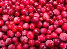 Frozen cranberry Royalty Free Stock Photo