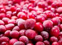 Frozen cranberry Stock Images