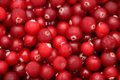 Frozen Cranberry Royalty Free Stock Image