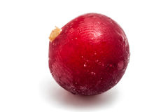 Frozen cranberry Royalty Free Stock Photos