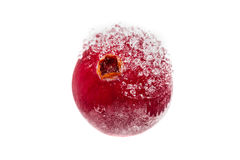 Frozen cranberry Stock Photography