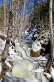 Frozen creek in the forest Royalty Free Stock Images
