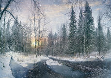 Frozen creek in the forest Stock Image