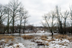 Frozen creek melting among dark trees near the winter forest Royalty Free Stock Image