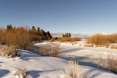 Frozen Creek. With snow near Lake Tahoe Royalty Free Stock Photos