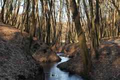 Frozen creek in a winter forest royalty free stock images