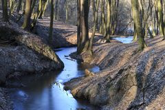 Frozen creek in a winter forest royalty free stock photography