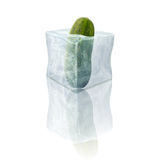 Frozen cucumber Royalty Free Stock Images