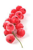 Frozen currants on white bacground Royalty Free Stock Images