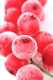 Frozen currants on white bacground Royalty Free Stock Photography