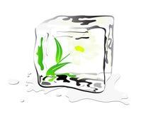 Frozen daisy Stock Image