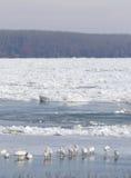 Frozen Danube river in Belgrade, Serbia Royalty Free Stock Image