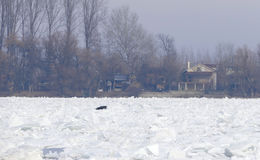 Frozen Danube river in Belgrade, Serbia Royalty Free Stock Image