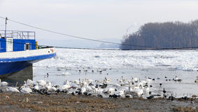 Frozen Danube river in Belgrade, Serbia Stock Photo