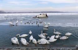 Frozen Danube river in Belgrade, Serbia Royalty Free Stock Images