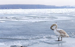 Frozen Danube river in Belgrade, Serbia Stock Image