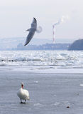 Frozen Danube river in Belgrade, Serbia Stock Photos