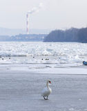 Frozen Danube river in Belgrade, Serbia Royalty Free Stock Photo