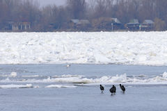 Frozen Danube river in Belgrade, Serbia Stock Photography