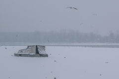 Frozen Danube river with captured boats and seagulls Royalty Free Stock Photography