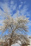 Frozen deciduous tree. On winter field close-up Stock Image