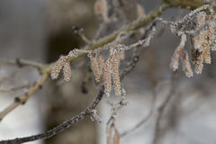 Frozen details on a tree Stock Images