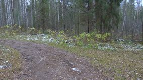 Frozen dirty pathway in the pine forest stock footage
