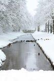 Frozen ditch in a park Stock Photos