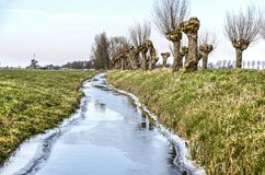 Frozen ditch with pollard willows. Frozen ditch in a polder landscape with pollard willows and, in the distance, a windmill Stock Image