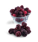 Frozen domestic red blackberries - isolated on white background Royalty Free Stock Images