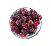 Frozen domestic red blackberries - isolated on white background Stock Image